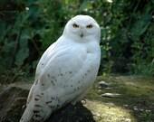 Owls  5x7