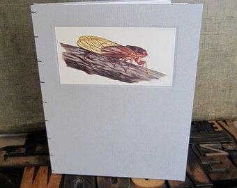 Bug Journal - Cicada