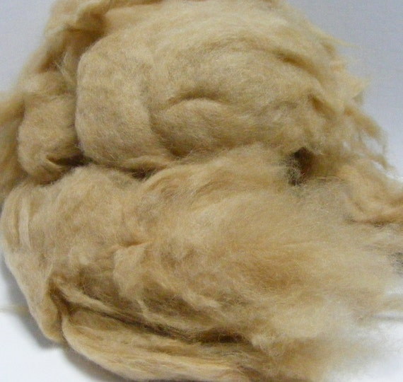 Loose camel fibers for spinning or blending