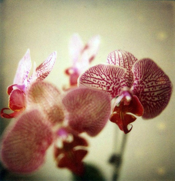 CLEARANCE Seduction - Fine Art Limited Edition Polaroid Giclee Print - Orchid, Pink and Green, Botanical Art, Garden Home Decor