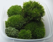 Mosses  for Terrariums, Planters, or any other crafts Fresh Green Forest Moss