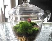 Terrarium, Mothers Day Gift,  Moss Terrarium,Handmade Mushroom, Green