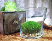 Glass Terrarium, Live Plants, Moss Terrarium