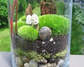 Glass Garden Terrarium,  Mosses and Lichens Like a Walk in the Forest