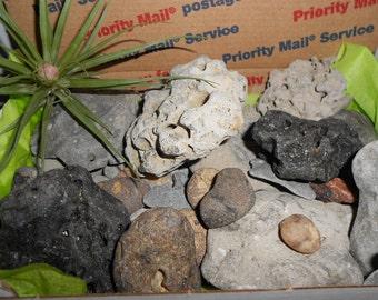 40 BEACH ROCKS for Your Terrariums, Planters, or Aquariums, Lot 2