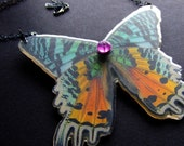 REAL preserved SUNSET moth BUTTERFLY Necklace by BelaBrazilianDesigns