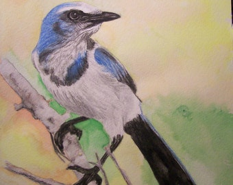 Blue Jay Wildlife Portraits Original Made to Order Watercolor Bluebird 9 x 12 inches by Pigatopia