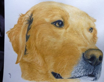 Golden Retriever Pink Nose Pet Portraits Original Watercolor Memorial U Provide Picture or Idea 9 x 12 inch by Pigatopia