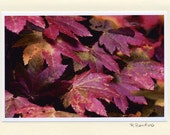 Red Vine Maple - Set of 4 blank  Cards - Handmade - Photo Greeting Cards - Note Cards - Autumn - Fall - Red