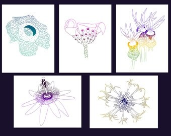 Set of 5 - exotic flowers cards, with envelopes