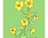 Wild Buttercups Print