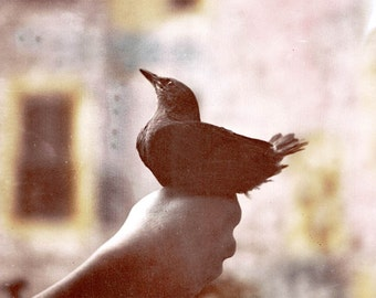 A Bird in the Hand tinted Vintage photograph