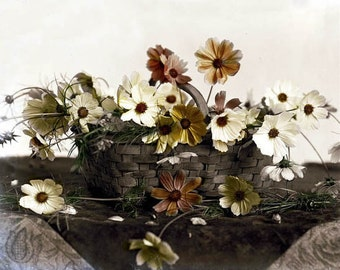 Daisies in a Basket Tinted Photograph from Glass Negative