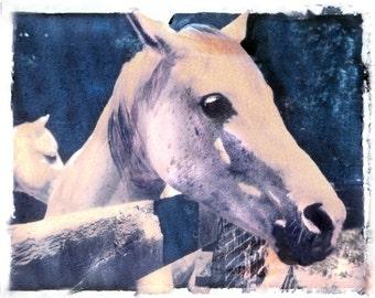 Photography White Horse in Barnyard Transfer Fine Art Photograph