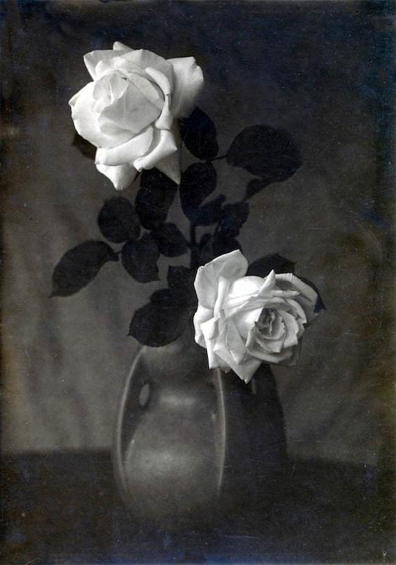 White Roses In Ceramic Vase Still Life Black And White Vintage