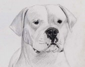Custom pet portrait, 9 X 11 inches, graphite pencil