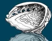 LARGE Print - Wild Abalone Seashell - Archival Special Edition Print of original ink drawing
