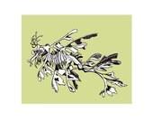 Sea Dragon - Original Drawing Limited Edition Art Print