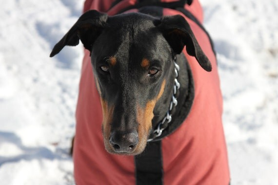 Warm Winter Dog Coat with tummy / chest cover size 27 - 28