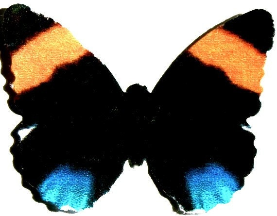 24 Black, Orange &  Blue Butterfly Paper Embellishment For Scrapbooking, DIY weddings, baby showers, wall art, cupcake toppers, school kits