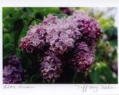 Lilac Dream - 4x6 Fine Art Photograph on 5x7 Card