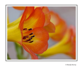 Flowers In Bloom, Nature Photograph, Flower print, 12x8 Photograph, Home Decor, Orange And Yellow