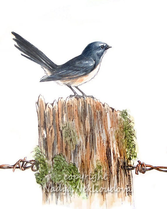 Willie Wagtail - ORIGINAL Watercolour, Pen and Ink Painting - 8x10 inches (20x25cm) - Australian bird art