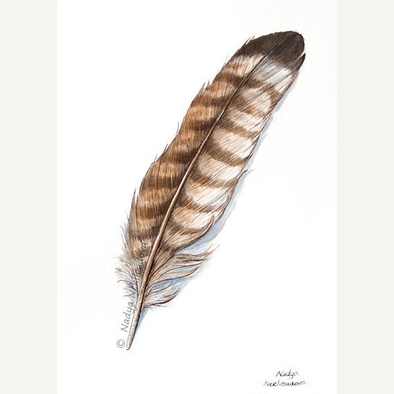 Bird Feather painting - ORIGINAL Art Watercolour, Pen and Ink - 5x7 inches (18x12cm) - natural history woodland tribal decor