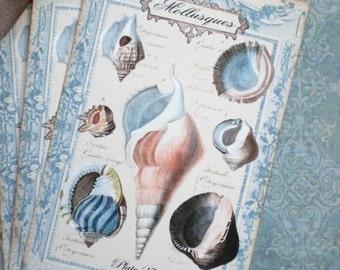 French Seashell Tags - Natural History tags - French Mollusques No. 27 Tags - Ocean, Beach - Set of 4