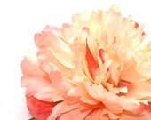 Peaches and Cream Sorbet Peony - 5 Inches of Boutique Goodness