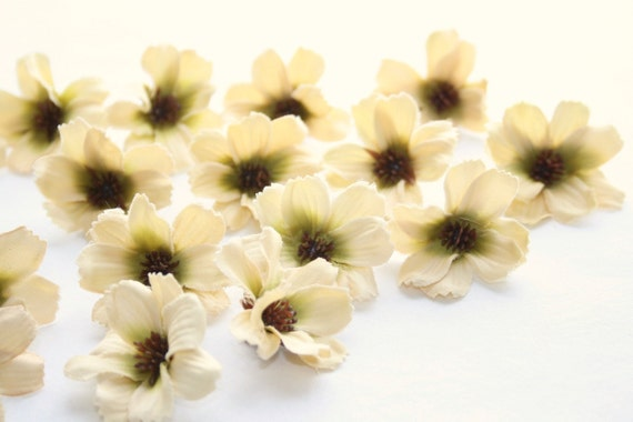 50 Khaki Vanilla Daisy Blossoms - Silk Artificial Flower Heads