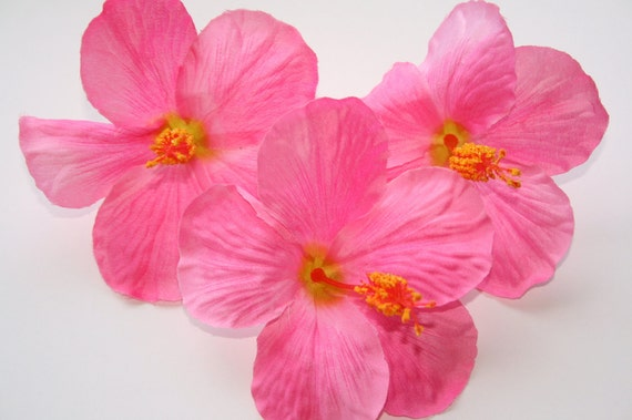 FIVE Hawaiian Tropical Hibiscus in Pink ....  5 inches