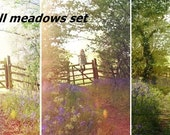 Bluebell meadows set. 3 6x4 matte prints.