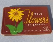 Vintage Book- Wild Flowers of America