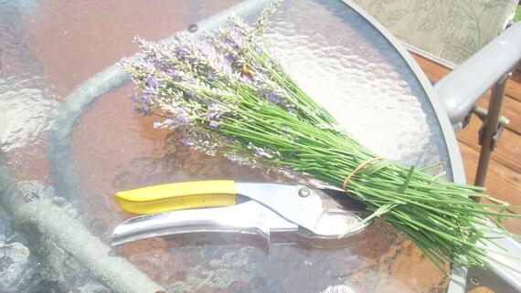 Lavender Cookies Recipe-PIF