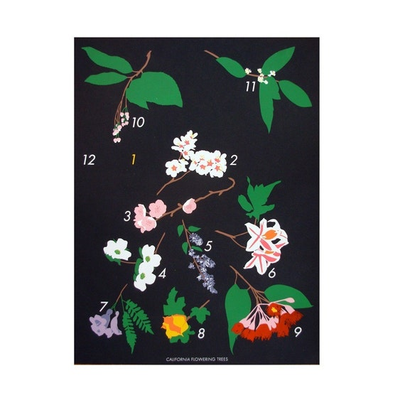 LAST CHANCE FOR California Flowering Trees / Claire Nereim