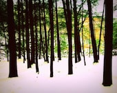 Winter Woods: a fine art photograph print of tree trunks in the woods with snow on the ground