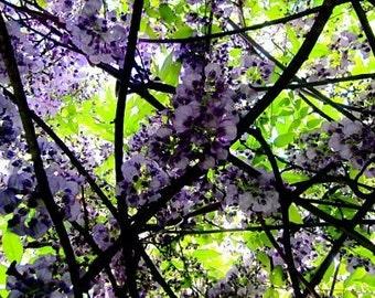 Neon Flower Photo, Wisteria Photograph, Bright Wall Decor, Bold Wall Art, Modern Floral Art, Bright Green, Bright Purple, Bright Floral Art