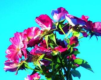 Neon Flower Photo, Vibrant Floral Photo, Magenta Aqua Art, Hot Pink Art, Bright Flower Photo, Colorful Flower, Bright Colors Photo