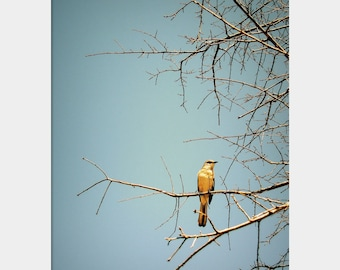 Perching Place: fine art photograph print with blue sky, bird, and bare brown branches