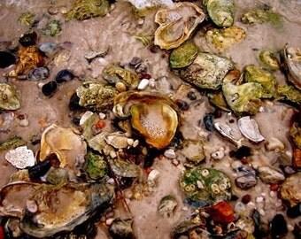 Seashells Photo, Neutral Home Decor, Coastal Wall Art, Beach House Decor, Shells Photograph, Shells on Beach, Seashore Photo, Ocean Springs