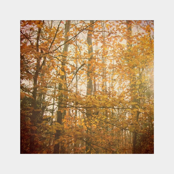 Autumn is Orange: a square fine art photograph print of woodland trees with glowing fall leaves in the forest