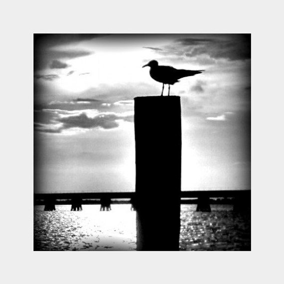 Seagull Silhouette Photo, Black and White Art, Dramatic Photo, Seagull Wall Art, Gulf Coast Wall Art, Bird Photograph, Black Home Decor