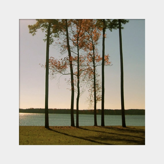 Standing Tall: a square fine art photograph print of six tall, straight, skinny tree trunks (calm Virginia landscape in autumn)