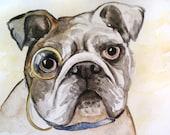"English Bulldog Watercolor Original Painting 5""x7"""