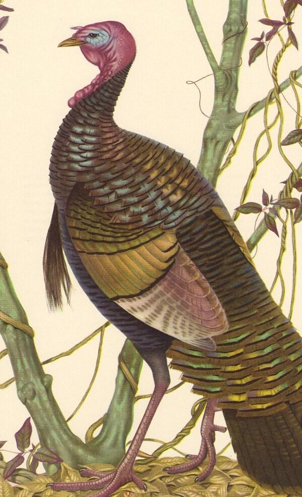 Vintage Menaboni S Bird Plate Eastern Wild Turkey Print