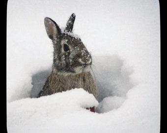 Snow Bunny, Winter Art, Winter Decor, Rabbit Art, Winter Artwork, Snow Photo, Nature Photography