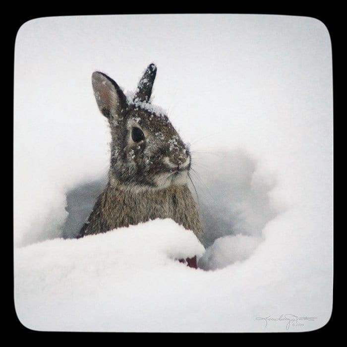 snow bunny winter art winter decor rabbit art by. Black Bedroom Furniture Sets. Home Design Ideas