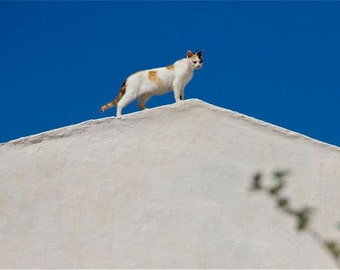cobalt blue white photograph cat standing on a slopping white roof abstract blue sky Santorini Greece Greek animal
