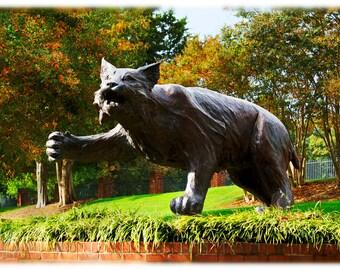 Davidson College Wildcat Statue - North Carolina Photography, Collegiate Home Decor Fine Art Print or Note Cards